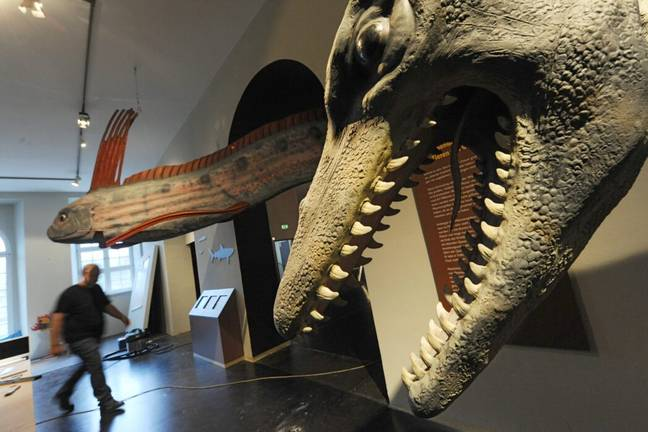 Replicas of other large sea creatures (PA Images)