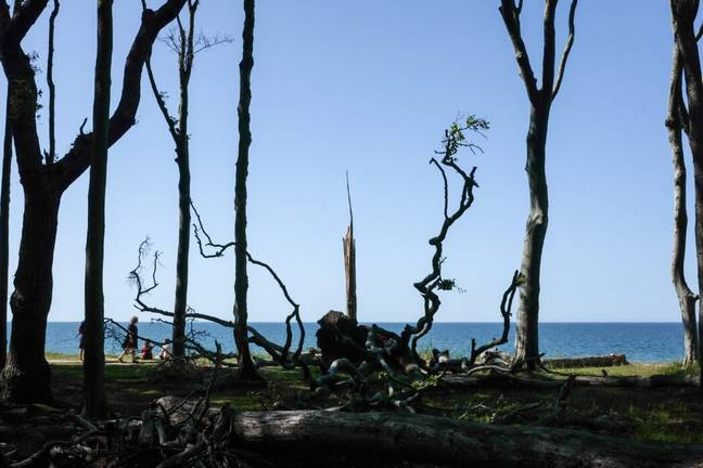 Dead trees form areas known as 'ghost forests' (PA Images)
