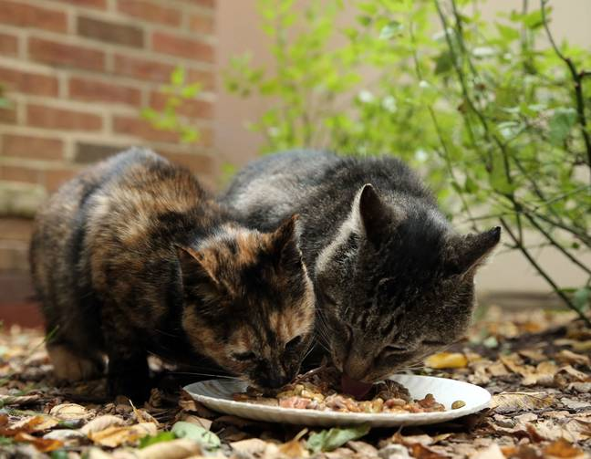 Cats eating (PA Images)
