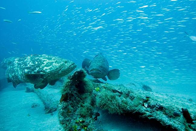Florida's coral reefs are under threat (PA Images)
