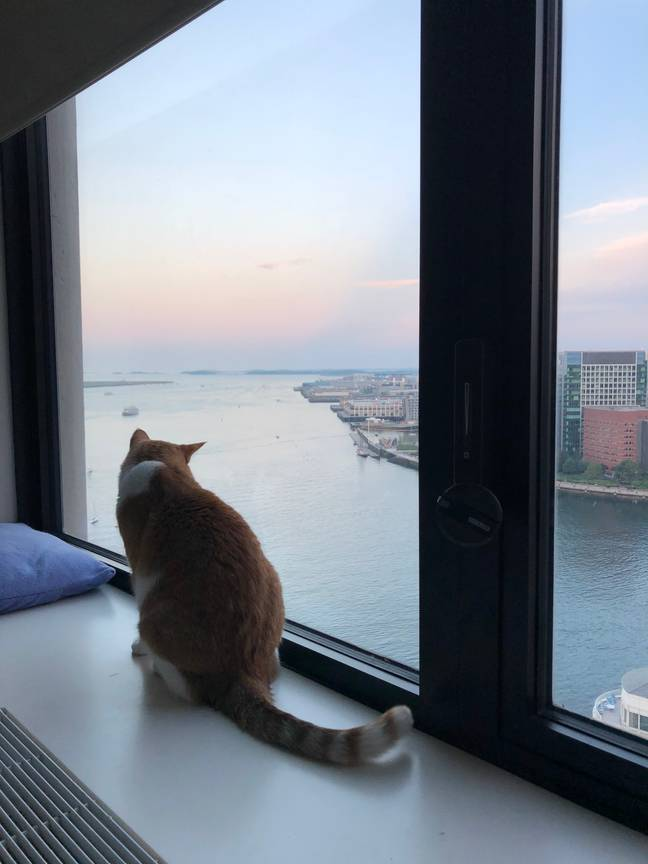 Cat looking over Boston waterfront (Supplied)