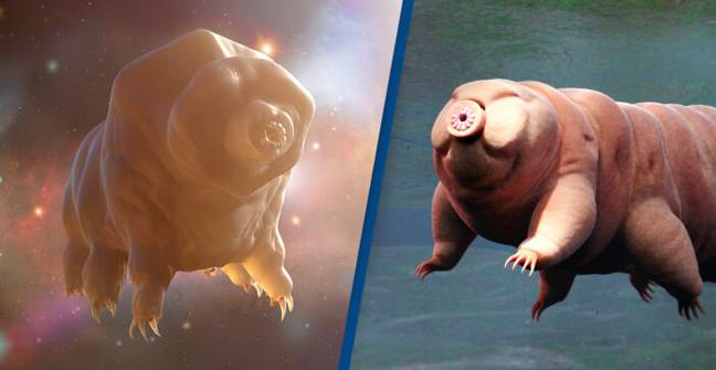 Scientists Shot Tardigrades 200mph Out A Gun To See If They'd Survive Interplanetary Travel