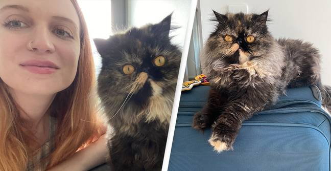 Woman Saves Over £16,000 By Looking After Cats While Travelling The World