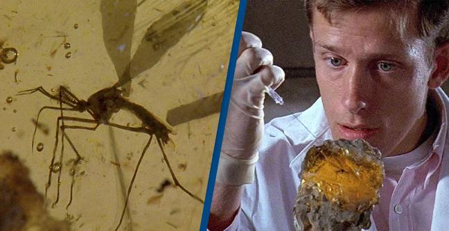 Genetically Modified Mosquitoes Released In Florida 'Jurassic Park Experiment'