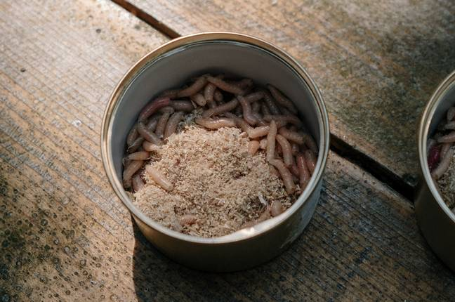 Maggots may become part of our diets in the future. (Pexels)