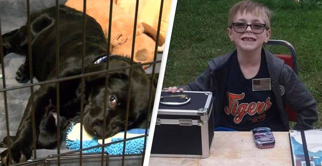 Boy Who Sold His Pokémon Collection To Save Dog Sent Rare Cards In Appreciation