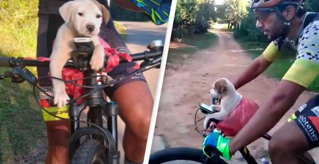 Cyclist Finds Puppy On Roadside, They Ride Back To Forever Home
