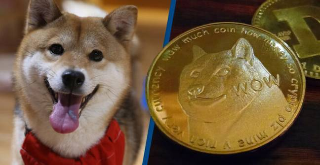 Cryptocurrency Expert Warns Against Investing In Dogecoin Rival Shiba Inu