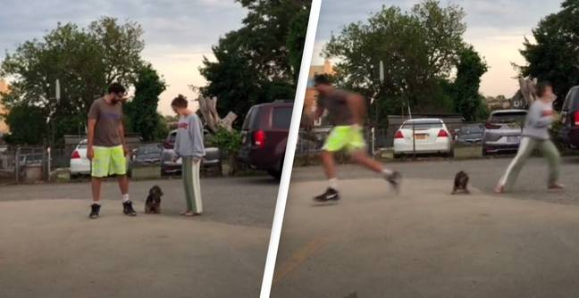 TikTokers' Dog Becomes Spinning Top As Owners See Who Is Favourite