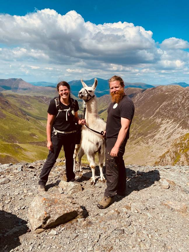 Shelley and Terry with llama (Supplied)