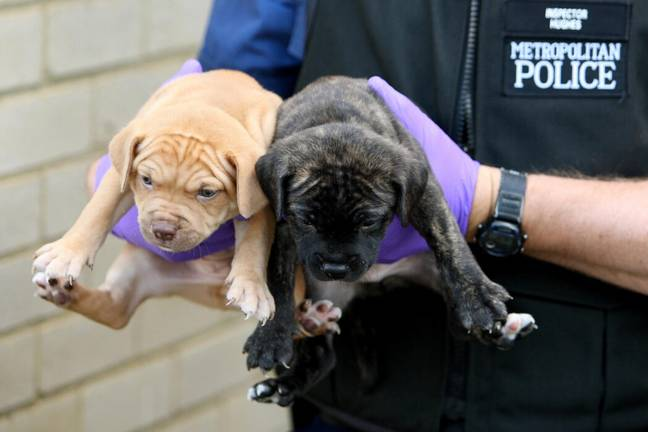A petition to change the law on dangerous dogs has reached 160,000 signatures (PA Images)
