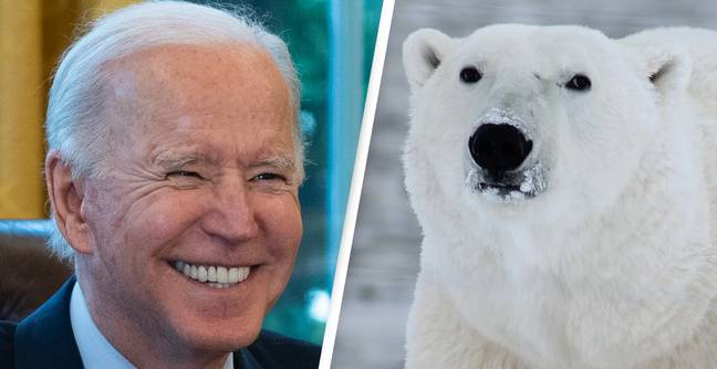 Biden Suspends All Oil And Gas Drilling In Arctic National Wildlife Refuge