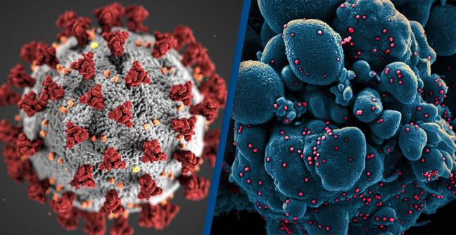 Another Coronavirus Epidemic Hit 20,000 Years Ago, New Study Finds