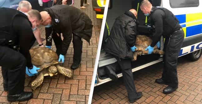 Runaway Turtle Arrested By Police After Being Found A Mile Away From Enclosure