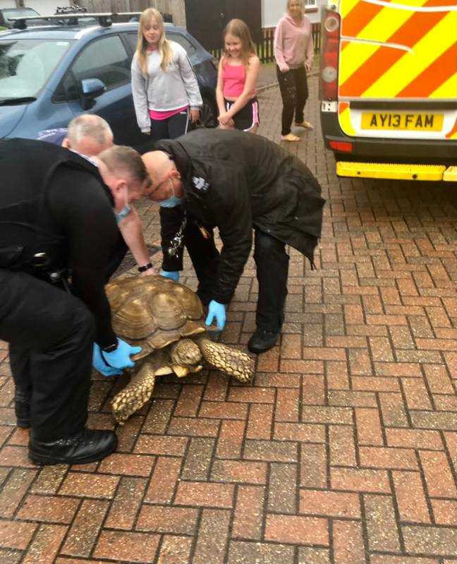 Titan the tortoise detained by police (SWNS/Suffolk Police)