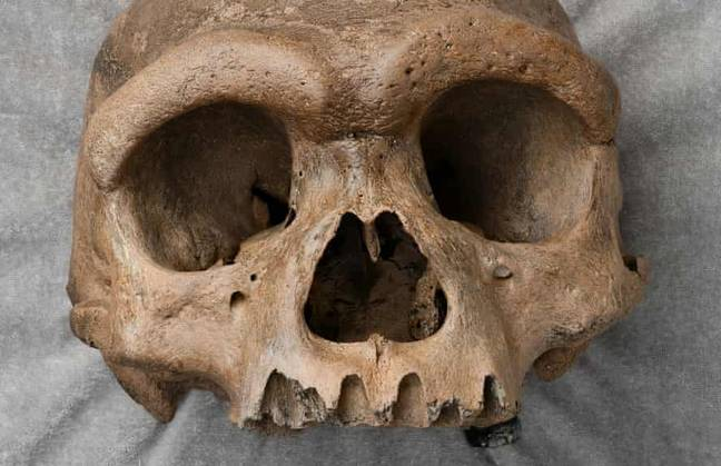 Fossilised skull hidden for 90 years in a well (Wei Gao/Hebei Geo University)