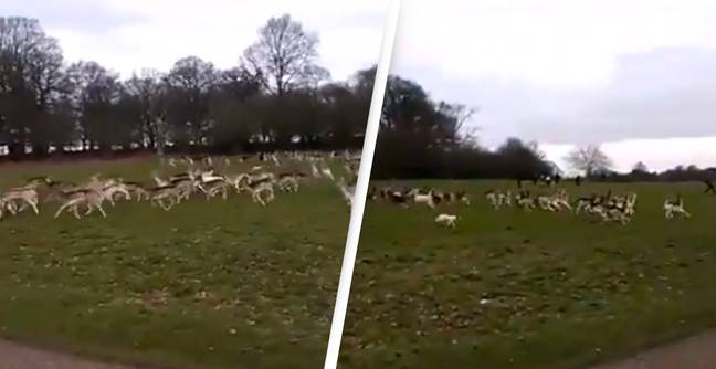 Tory MP Danny Kruger Fined After Puppy Causes Mass Stampede Of 200 Deer In Park