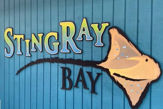 Stingray Bay was one of the most popular attractions at the zoo (Fox13/YouTube)