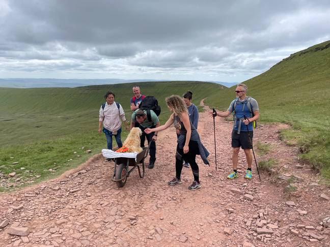 Dog goes on hike in wheelbarrow (The Brecon and Radnor Express/Facebook)