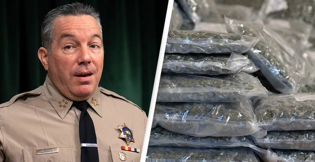 Authorities Seize Largest Bust Of Illegal Weed In Los Angeles' History