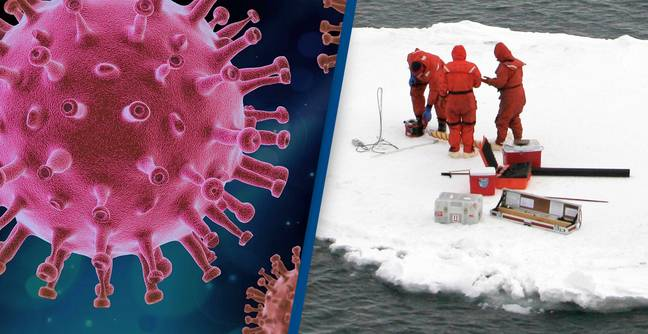 Scientists Discover More Than 30 Unknown Viruses Frozen In Ice