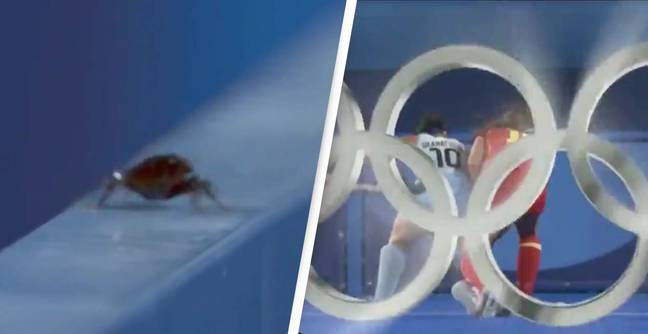 Olympic Cameraman Scorned For Filming A Cockroach