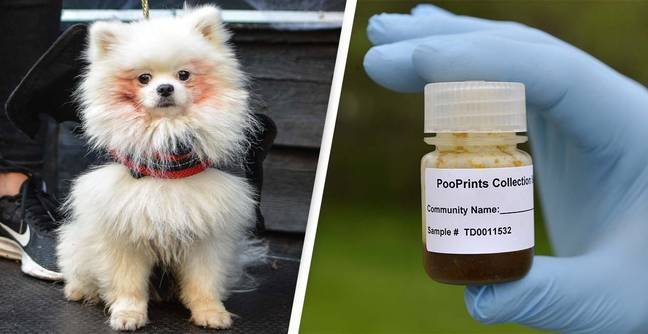 Dog Owners Set To Provide Pet DNA To Identify Poo Left On Street
