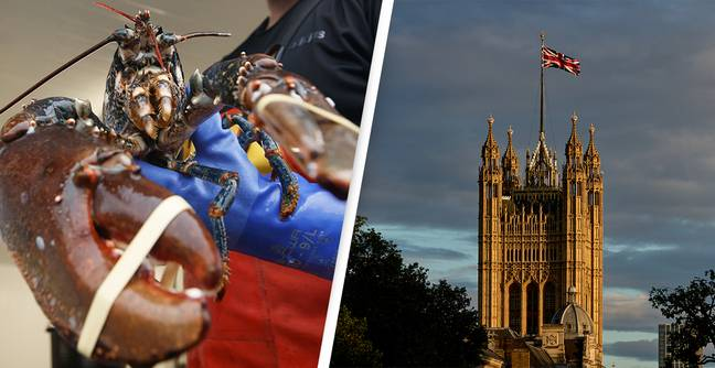 Boiling Lobsters Alive To Be Banned In New Animal Welfare Bill