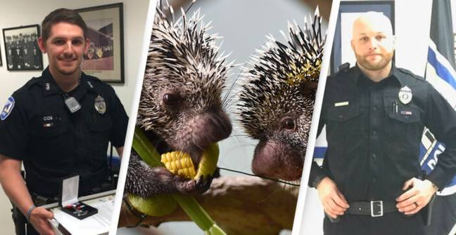 People Outraged As Cops Who Beat Porcupines To Death On Duty Receive Reduced Sentences