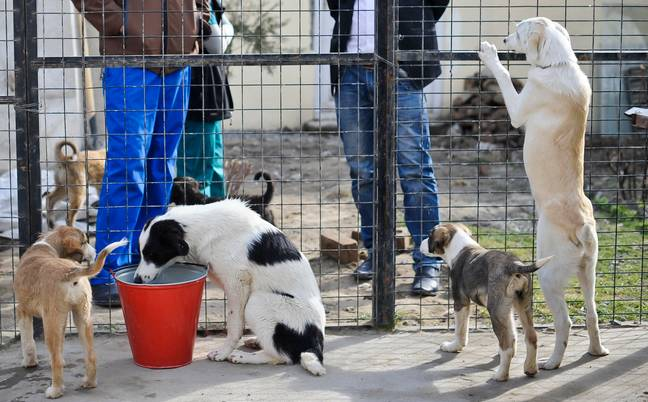 Dogs in a kennel PA)