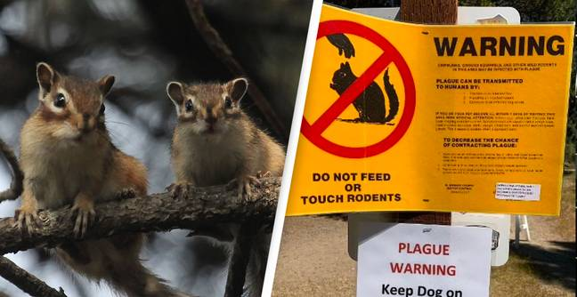 Plague-Infected Chipmunks Cause Parts Of Lake Tahoe To Close