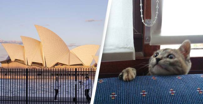 Far-Right 'Australia Has Fallen' Hashtag Taken Over By People Posting Images Of Their Pets