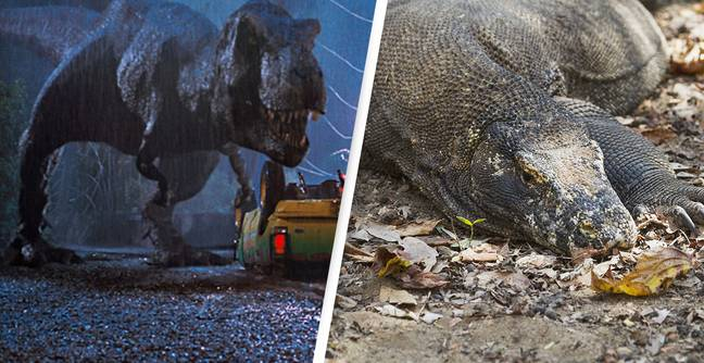 Indonesia's 'Jurassic Park' Going Ahead, Despite Obvious Warnings