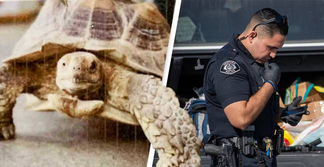 Police Appeal For 'Suprisingly Fast And Smart' Tortoise That Escaped From Pet Shop