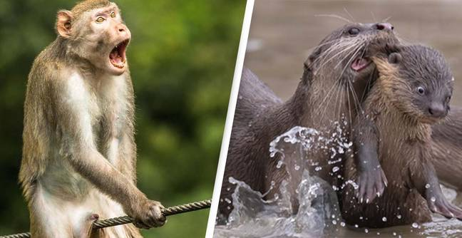 Comedy Wildlife Photography Awards Finalists Announced And They Are Spectacular