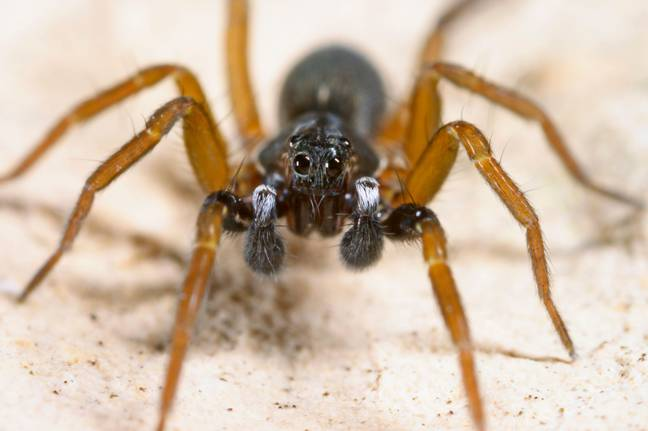 Augmented Reality App Developed To Help People's Fear Of Spiders (Alamy)