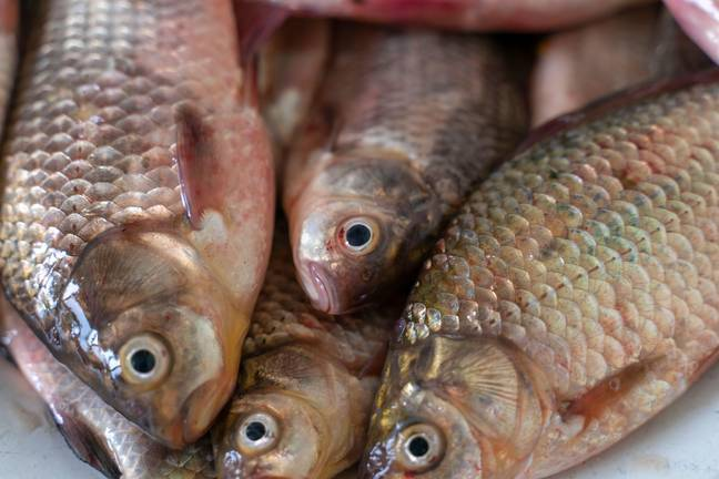 Around 300-600 carp died in Lake Orion this summer. (Alamy)