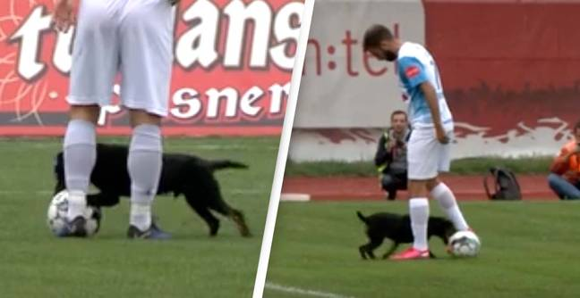 Dog Invades Football Pitch, Steals Ball And Nutmegs Two Players