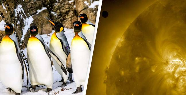 Penguins are Aliens? (PA)