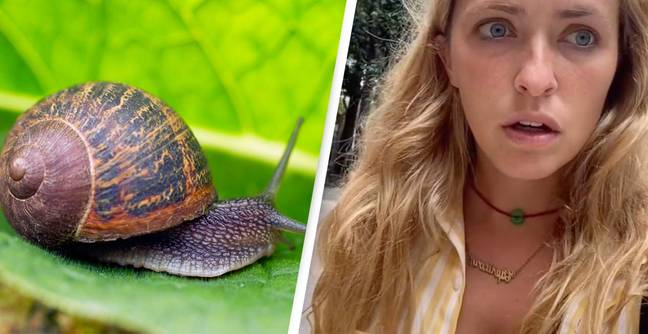 People Are Shocked After Learning How Slugs 'Drink Water''