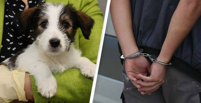Pet Abduction To Be Made A Criminal Offence In England