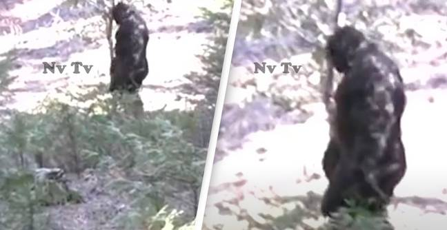 Bigfoot Spotted In Idaho Has People Thinking It Could Be Real