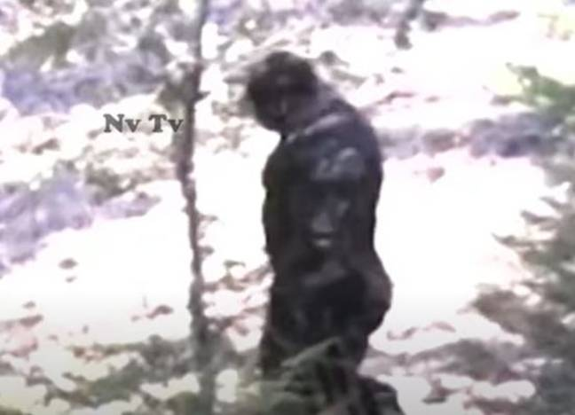 Footage claims to show bigfoot (Nv Tv/YouTube)