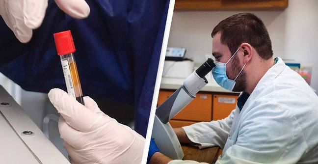 Blood Test That Detects Cancer Before Symptoms Appear Begins Trial