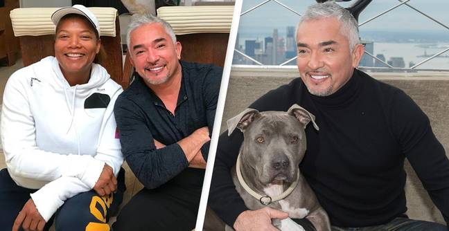 'Dog Whisperer' Cesar Millan Attempted Queen Latifah Dog Death Cover-Up, Lawsuit Claims