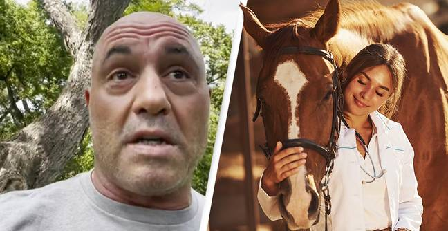 Joe Rogan Has COVID-19 And Using Horse De-Wormer To Try To Treat It