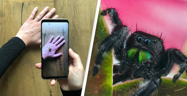 Augmented Reality App Developed To Help People's Fear Of Spiders