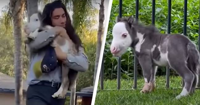 World's Smallest Horse Who 'Thinks He's A Dog' Is Too Wholesome