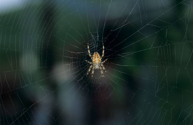 Spider in Web Garden spider (Araneus diadematus) early on an autumn morning on a spider's web (Alamy)