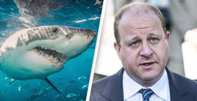 Confusion As Colorado Governor Celebrates His Landlocked State's Lack Of Shark Attacks
